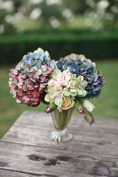 multicolored hydrangeas
