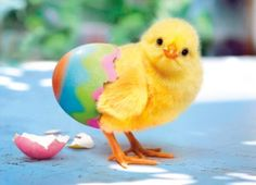 It's A Spring Thing...Happy Easter!