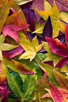 Fall Colors Beautiful