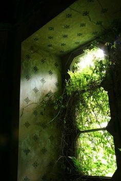overgrown inspiratio
