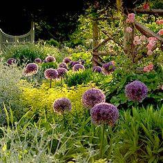 Ornamental Alliums from P. Allen Smith