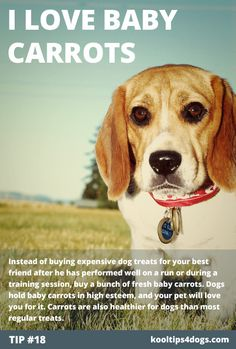 Treat Your Dog with Baby Carrots  Instead of buying expensive dog treats for your best friend after he has performed well on a run or during a training session, buy a bunch of fresh baby carrots. Dogs hold baby carrots in high esteem, and your pet will love you for it. Carrots are also healthier for dogs than most regular treats.  www.koolcollar4dogs.com