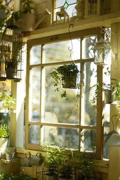 garden window practical magic, window view, hanging plants, potting sheds, old windows, beauti, green cottag, greenhous, garden windows
