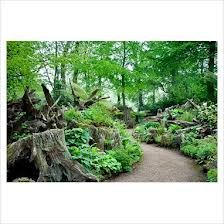 Highgrove House.  Stumpery in the Prince of Wales' garden