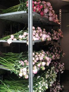 Peonies in the cooler at Dancing Moon Farm