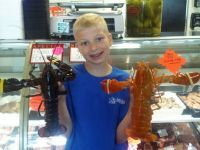 Live shipment includes not one but six extremely rare orange lobsters