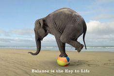 lgpp31157+balance-is-the-key-to-life-balancing-elephant-poster.jpg (452×302)