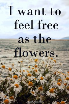 I want to feel free as the flowers quote flowers life live free hippie simple boho flowerchild I wanna be a flower but a endless one that lives years. oh the things you could see but never tell
