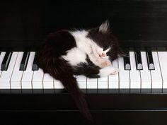 musical cat ∞