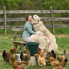 Chickens & Dogs. This is love.