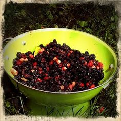 DO: Mulberries - the forgotten fruit Great tips & tricks to use up our mulberries.