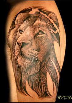 #lion #tattoo