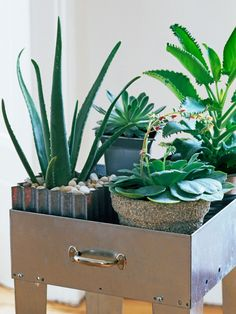 Think Outside the Pot with These Container Garden Ideas --> http://www.hgtvgardens.com/decorating/clever-container-garden-ideas?soc=pinterest