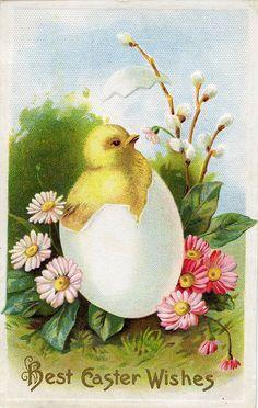 Charmingly cute chick adorned vintage Easter postcard. #Easter #vintage #card #postcard #egg
