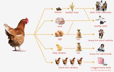 Choosing Chickens: How to Select Chickens for the Backyard Flock - #Chickens Nice info! www.FreeHenHousePlans.net Order Chicks http://www.eFowl.com/?Click=32918