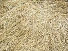 Dry Long Grass