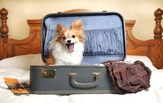 Don't leave your pet behind when you go away ... We are a pet friendly hotel in Mayfair next to Green Park, see what we offer here ... bit.ly/1jCxNLI #PetFriendly
