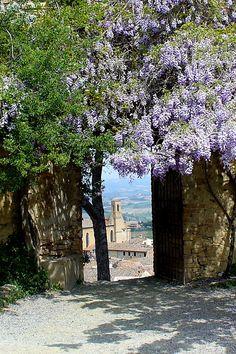In the Castle of San Gimignano - San Gimignano, Siena Tuscany