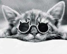 A cat in cat sunglasses (: #eyewear #glasses #pets #specs #hipster #animals #London