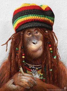Fancy Monkey Style #ape #rasta #reggae #orangutan