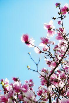 blossoms.. (via #spinpicks)