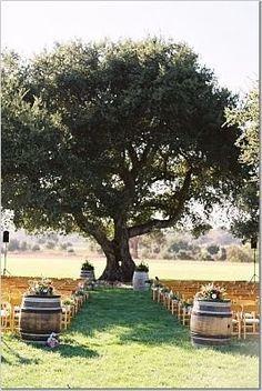 wooden chairs, outdoor ceremony, tree, wine barrels, wedding ideas, dream, country weddings, whiskey barrel, outdoor weddings