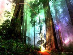 The northwest edge of Galdoren Woods. (The Door in the Sky). #fantasybooks