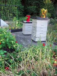 Beehives on Roof as Part of Edible Green Roof Plan
