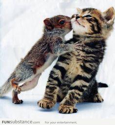 Squirrel and Cat - Overly Attached Squirrel