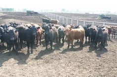 Keep Heifer Development Costs In Check - eXtension