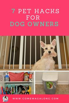 7 Pet Hacks for Dog