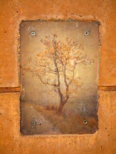 The Last Tree- Tara Turner