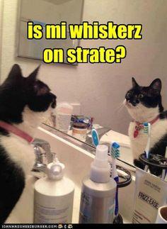 is mi whiskerz on strate? #cat #meme #lolcat