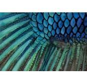 Fish Scales On Tumblr... http://www.tattoodonkey.com/mermaid-scales-tattoo-leg-fish-tattoo/