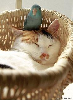 birdy on kitty