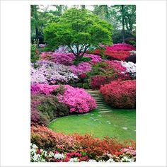 Azalea, Rhododendron and steps to sunken lawn area. The Punch Bowl at Valley Gardens, Virginia Water, Surrey