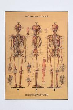 bones, bones and bones