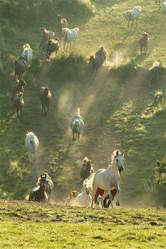 wild, wild horses....
