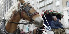 Horse-drawn carriage rides through NYC expected to be banned by 2015.