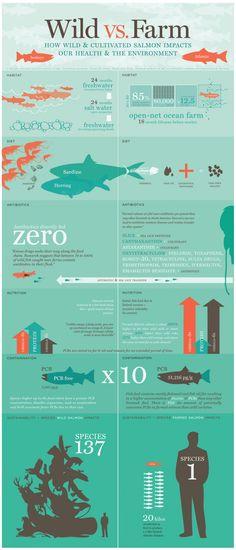 Salmon: Wild vs. Farm [infographic]   Daily Infographic