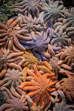 Colorful Starfish    ;)