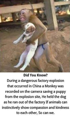 Animals are incredible