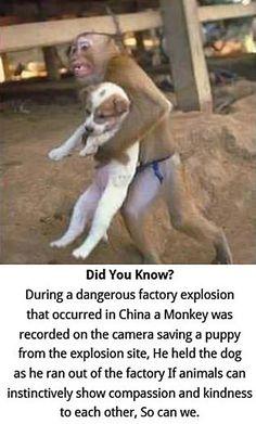 monkey saves puppy...