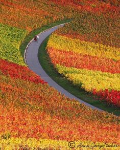 Autumn colors, vineyards near Heilbronn, Germany.