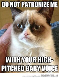 What cats are really thinking when we speak to them…