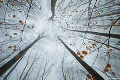 The Surreal Forests of Romania trees Romania