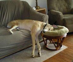 great danes, nap time, anim, pillow, pet