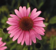 These special plants provide beauty, fragrance, food, medicine and more.