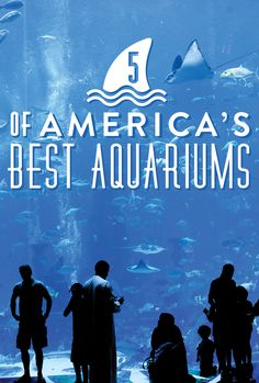 """5 of America's must-visit aquariums! - Happy to say I've been to one of them many, many times and I LOVE it. My husband's favorite part is saying """"I'm going to eat you later!"""" to some of the fish and then getting dinner at Legal Sea Food across the street. :)"""
