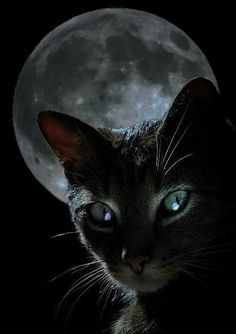 Will work nights. Not afraid of detecting in the dark. cat art, magic, la luna, black cats, green eyes, beauty, blue moon, halloween, cat photos